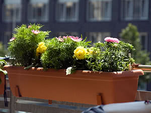 Цветы в горшке на балконе
