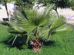 Пальми