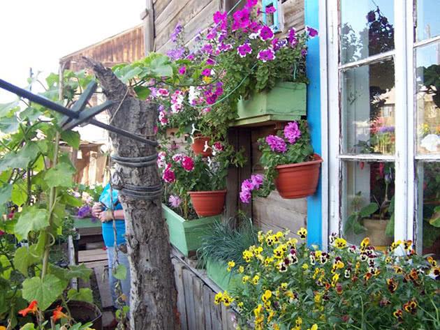 Бальзамин и пеларгония на улице летом