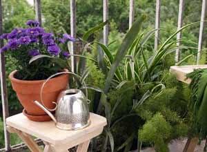 Квіти у горшику на балконі