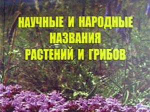 Названия комнатных цветов