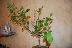 Опадає листя
