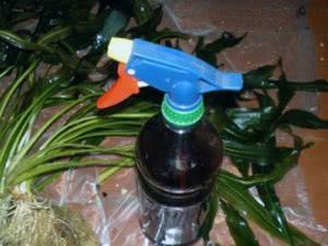 Обприскування домашньої орхідеї