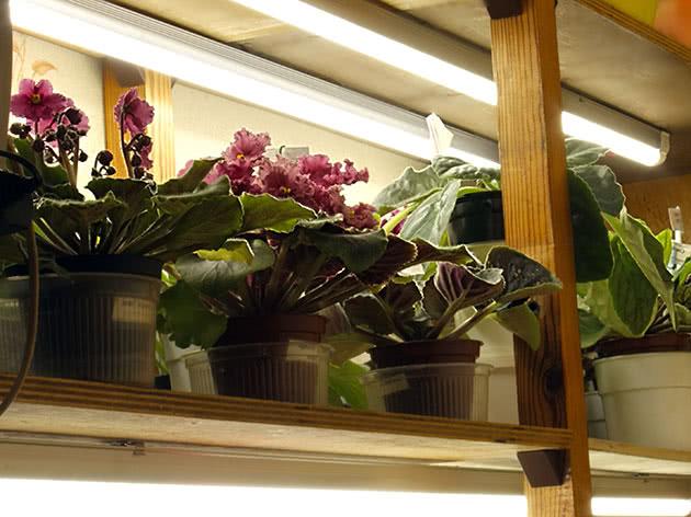 Дополнительно освещение для растений