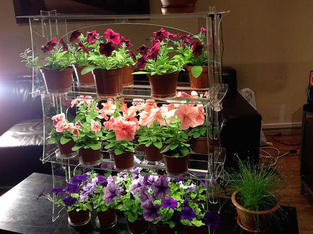 Как освещать растения зимой