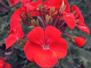 Полезность цветов – зачем они нужны