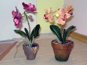 Орхідея у горщику