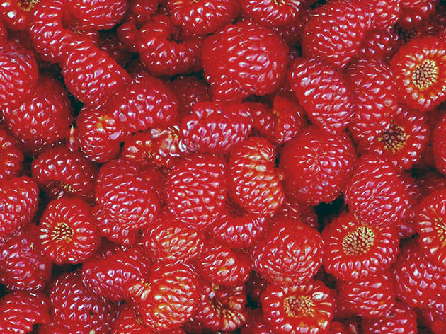 Raspberry is a useful berry