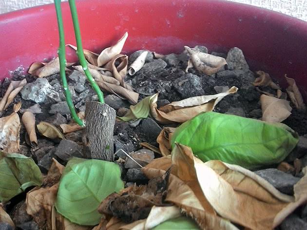 Опадают листья растения