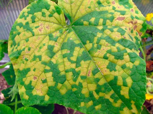 Пятна на листьях растений