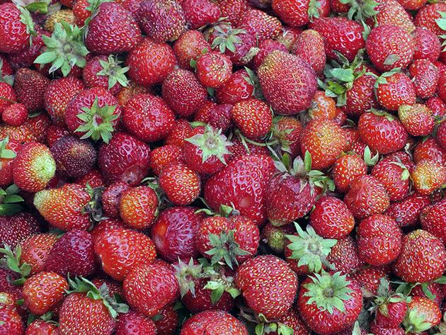 Стиглі ягоди полуниці