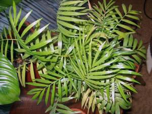 Как ухаживать за теневыносливыми растениями