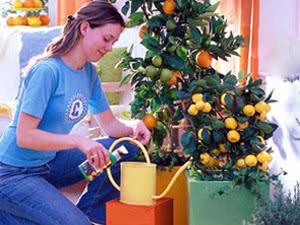 Плоди цитрусових рослин