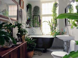 Комнатные растения в ванной