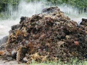 Навоз – это органическое удобрение