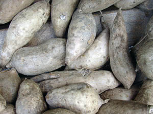Солодка картопля батат