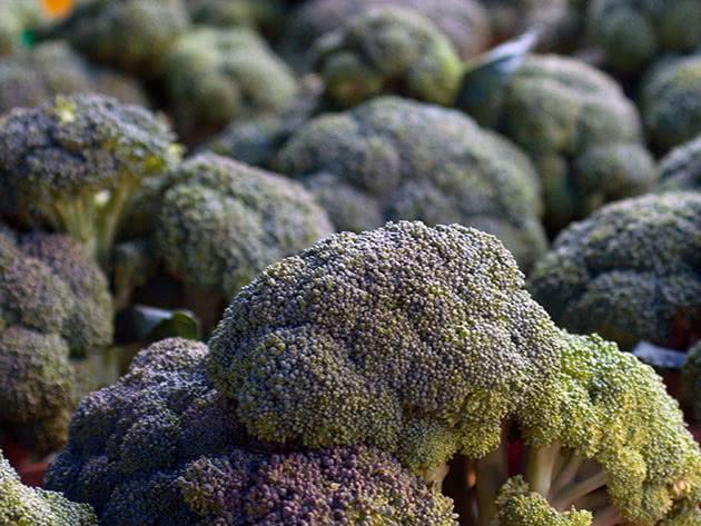 Вирощування броколі на городі – посадка і догляд