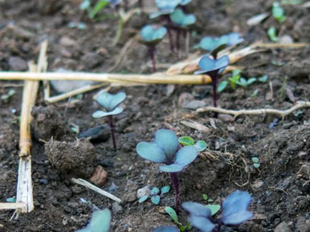 Болезни и вредители рассады капусты
