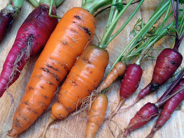 Плід моркви