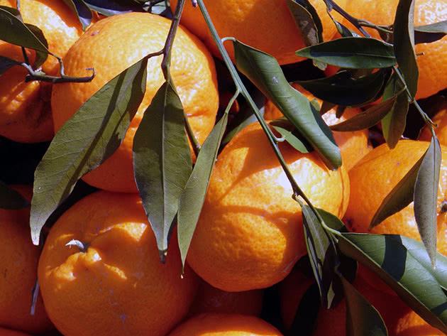 Види і сорти домашнього мандарина