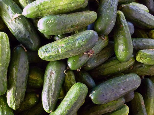 Огірки після збору врожаю