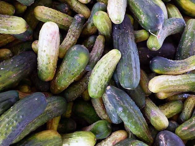 Як вирощувати огірки правильно