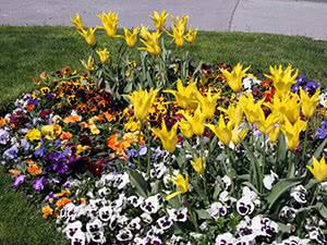 Посев цветов в апреле в открытый грунт