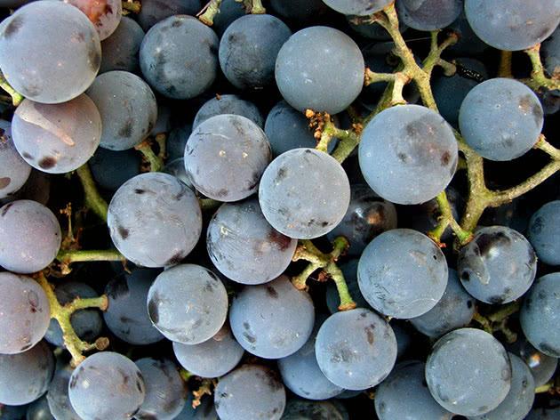 Виноград после сбора урожая