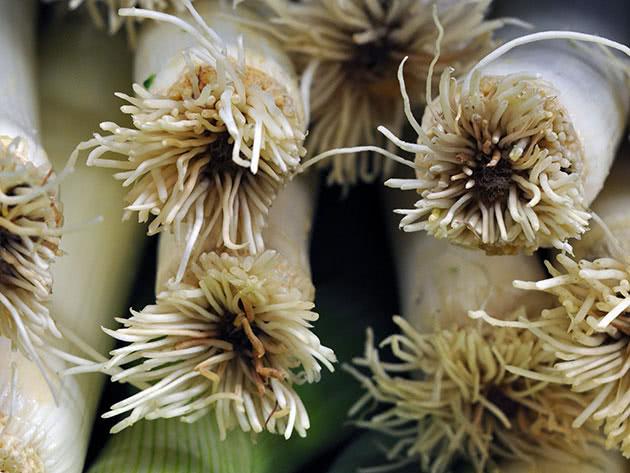 Полезные свойства лука-порея и противопоказания