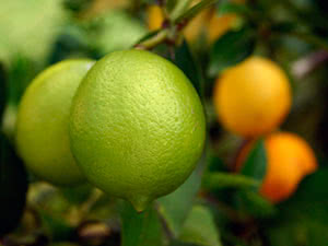 Домашній лимон