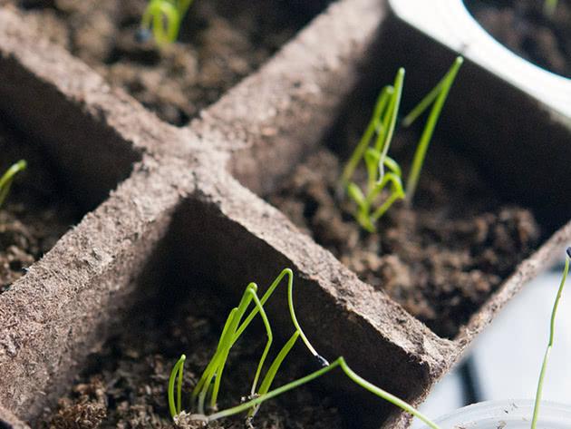 Условия выращивания рассады лука в домашних условиях