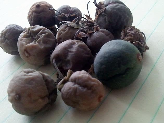 Стиглі плоди картоплі з насінням