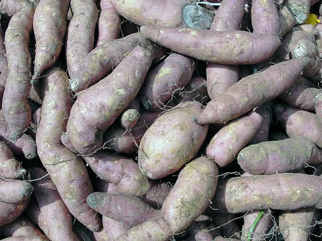 Посадка і догляд за картоплею в саду