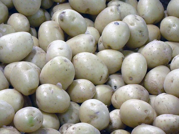 Обробка картоплі від хвороб