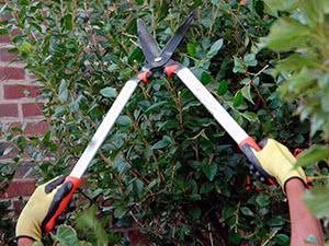 Весенняя обрезка плодовых кустарников