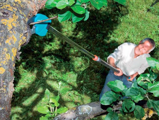 Як правильно навесні обрізувати дерева