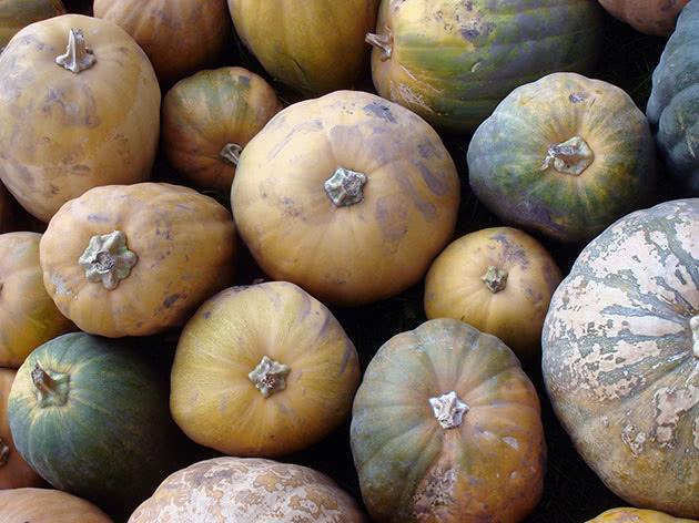 Овоч гарбуз