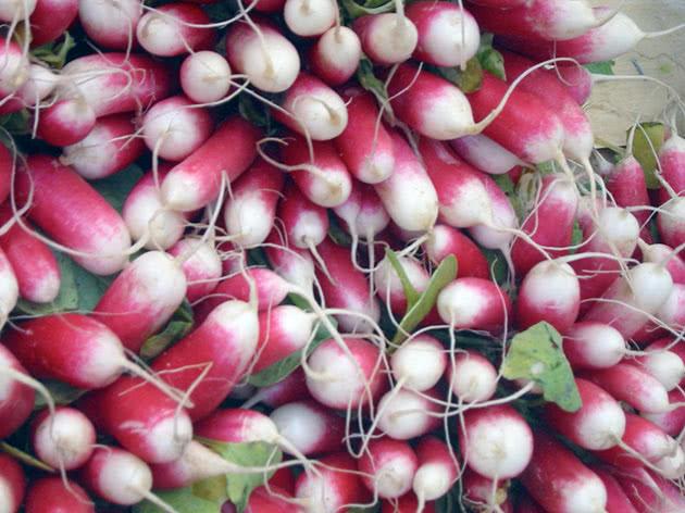 Овощ редис