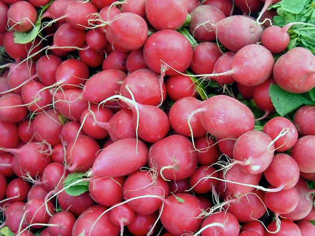 Овощ редиска после выкапывания