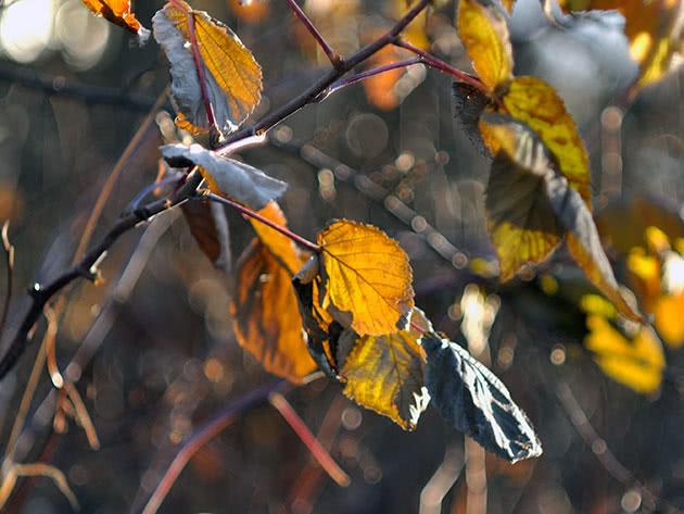 Догляд за малиною восени