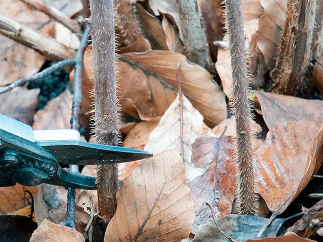 Осіннє обрізування малини перед зимою