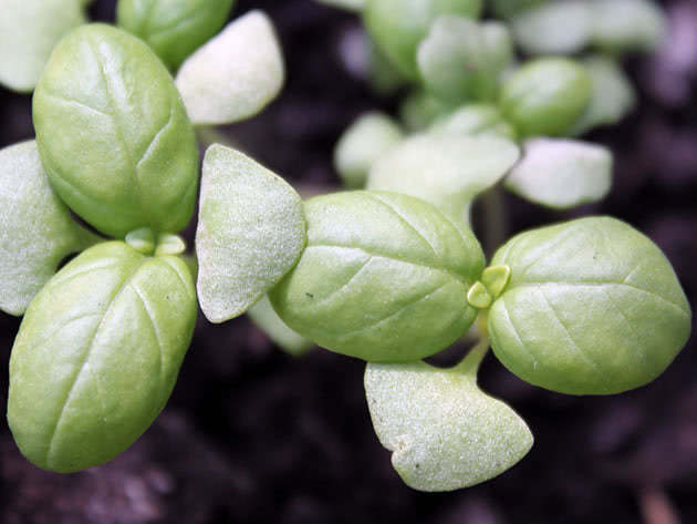 Выращивание рассады овощей в марте