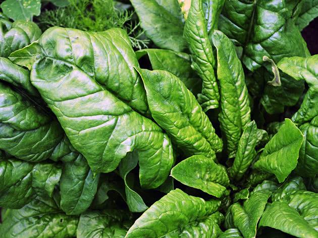 Виды и сорта шпината садового