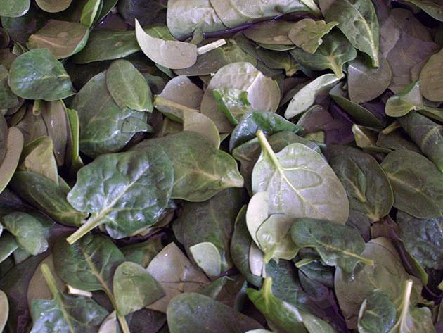 Виды и сорта огородного шпината