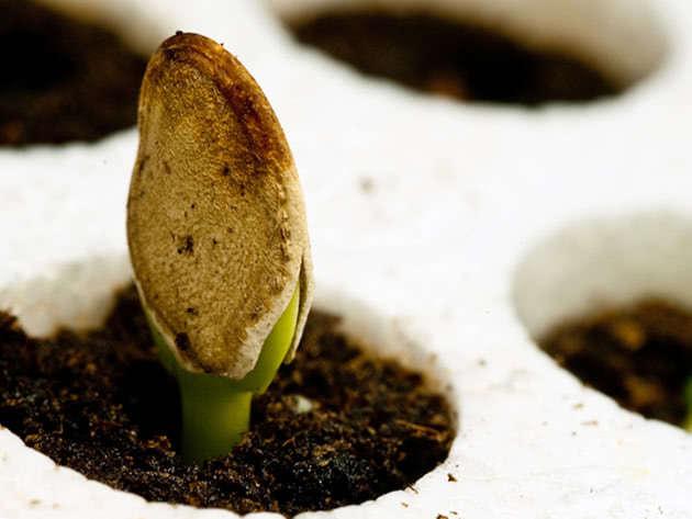 Условия для стратификации растений