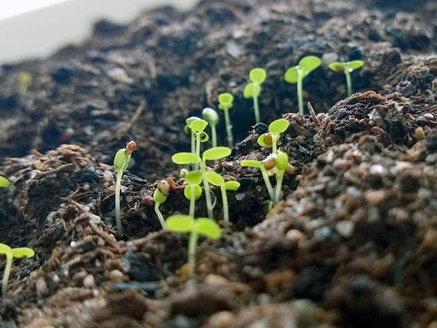 Посадка семян клубники на рассаду