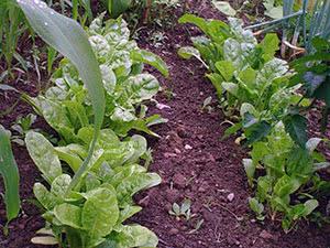 Посев овощей в открытый грунт в марте