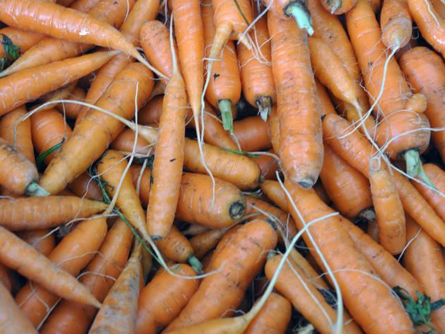 Посадка моркови в открытый грунт в марте