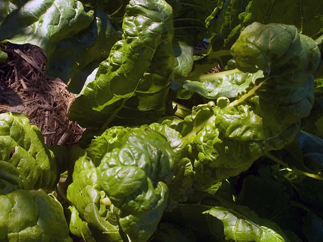 Как и когда сажать овощи в открытый грунт в марте