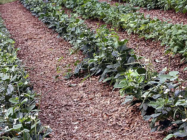 Посев семян овощей в марте в открытый грунт